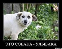 post-6686-1408098844,9348_thumb.jpg