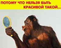 1171914825_1_FT16_baltgsm2446.jpg
